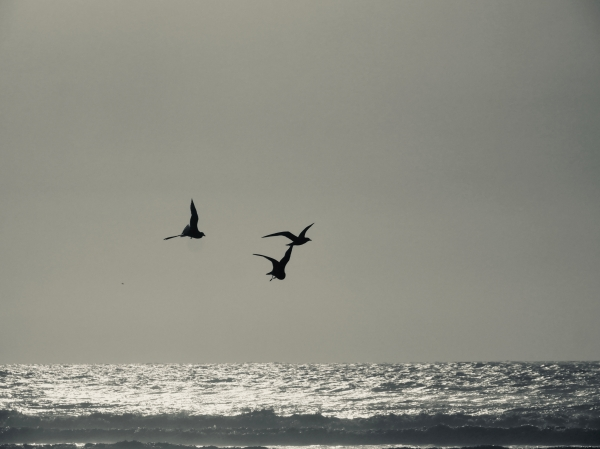 three gulls flying over the surf