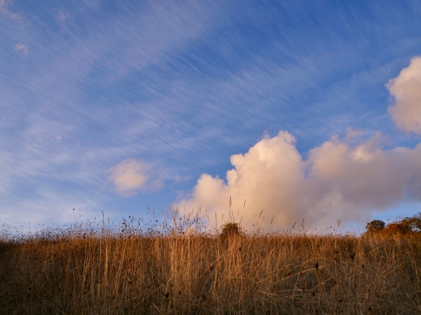 Meadow, blue sky and white clouds
