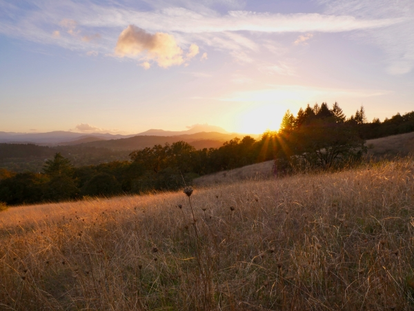 Sun setting over meadow, trees and mountains