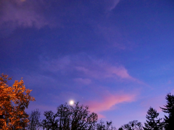 Moon, Saturn and Trees