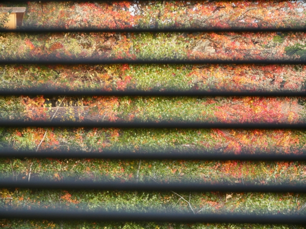 Fall foliage seen through window blinds