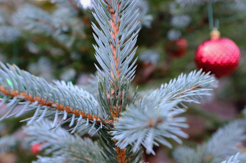 Blues spruce needels and Christmas ornament