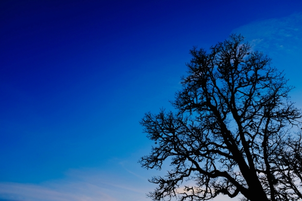 Bare tree and