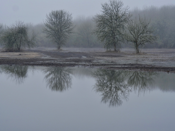 bare trees and reflections