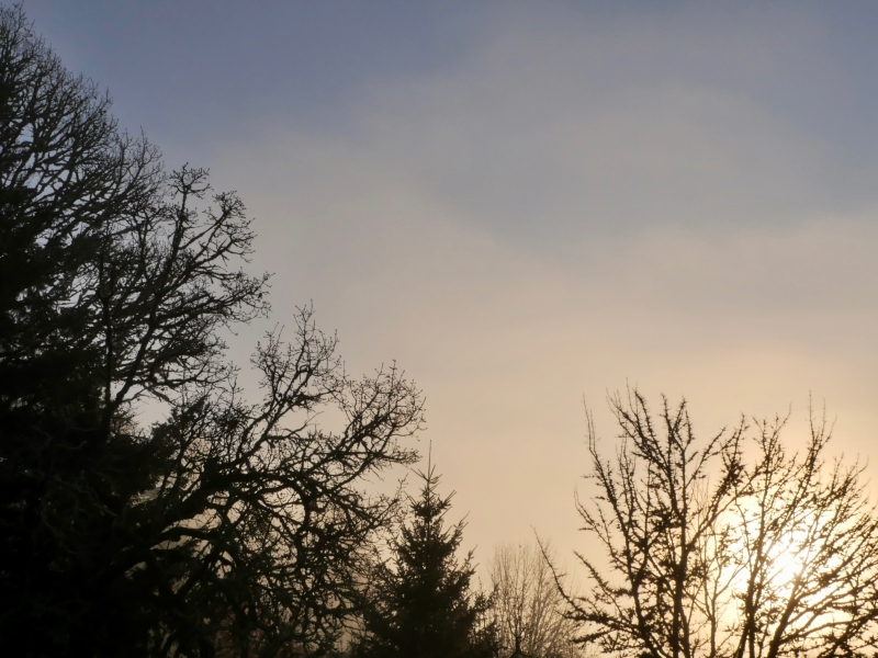 Bare trees and rising sun