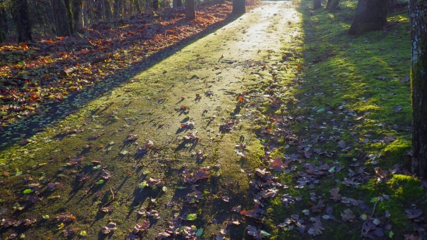 Path covered in green moss and autumn leaves