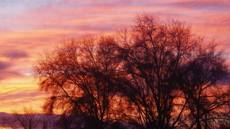 Pastel sky and silhouetted bare trees