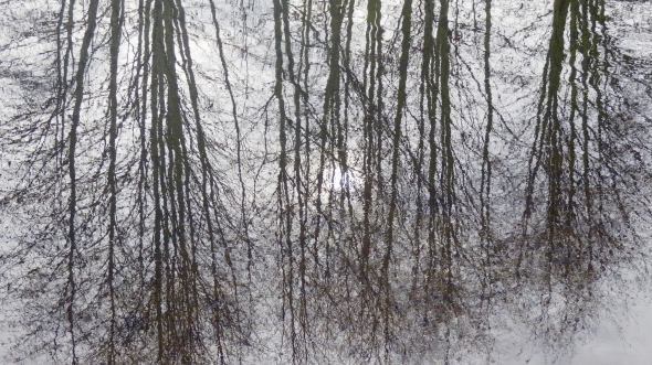 reflection of bare trees