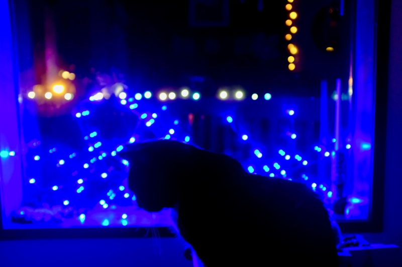 Cat in window at night with holiday lights