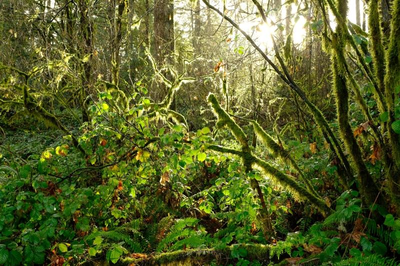 Sun shining in green forest