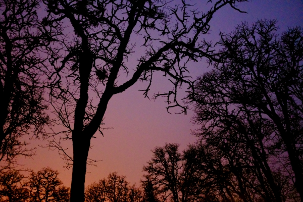 Bare trees and sky glow at dusk