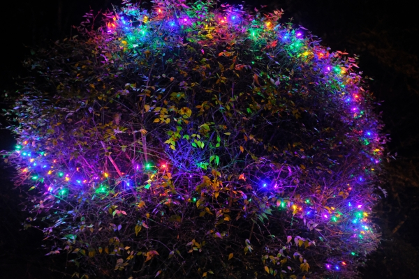 shrub lit by holiday lights