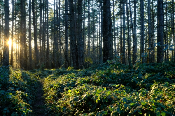 Forest, trail and setting sun