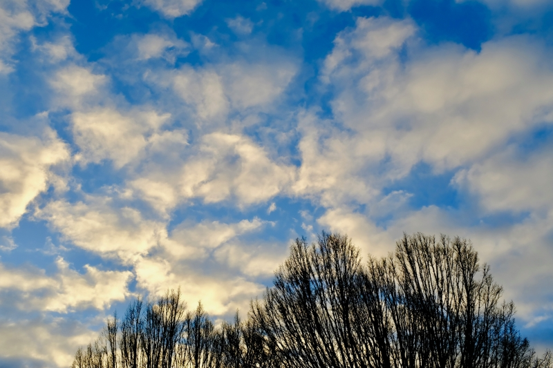Bare trees, blue sky, white clouds