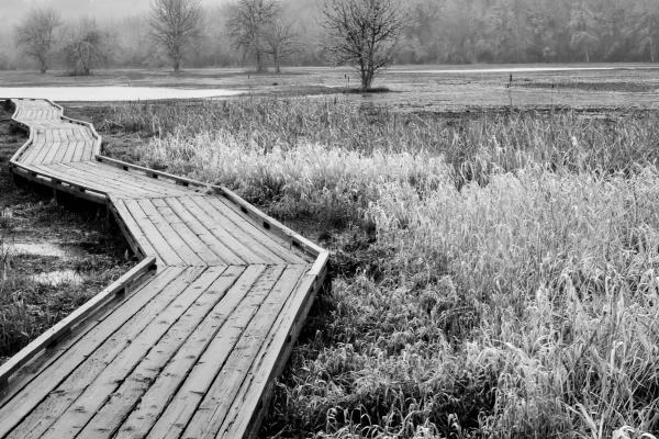boardwalk on edge of wetlands
