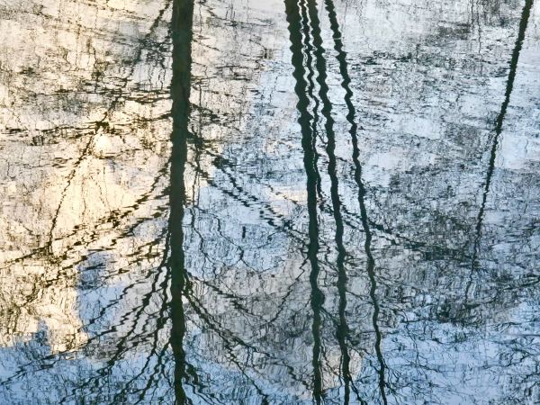 Reflections of bear trees in a marsh