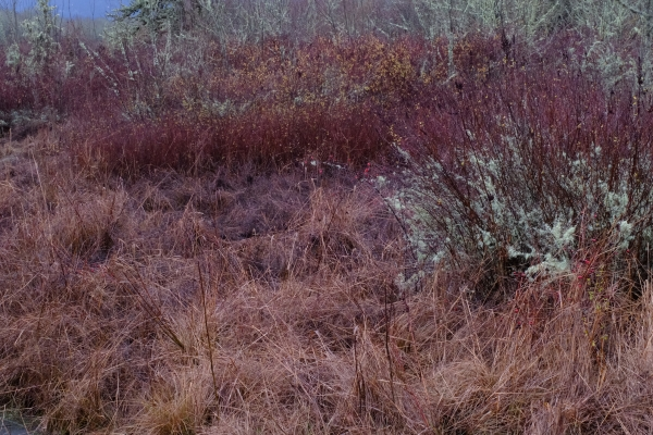 Wetland grasss, shrubs and small trees