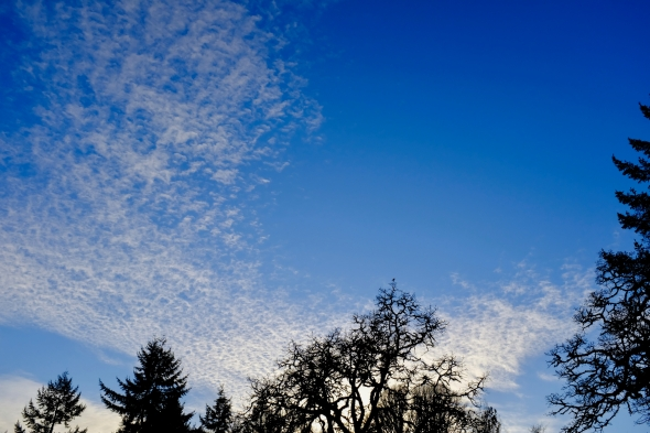 Bare trees and wispy clouds