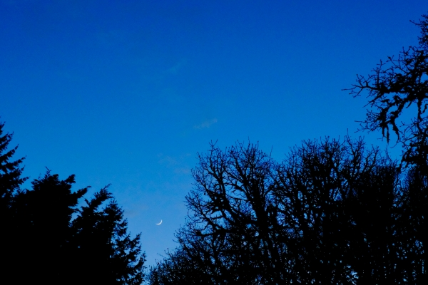 Crescent moon and bare trees