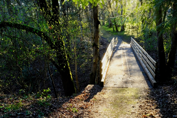 Walking bridge in forest