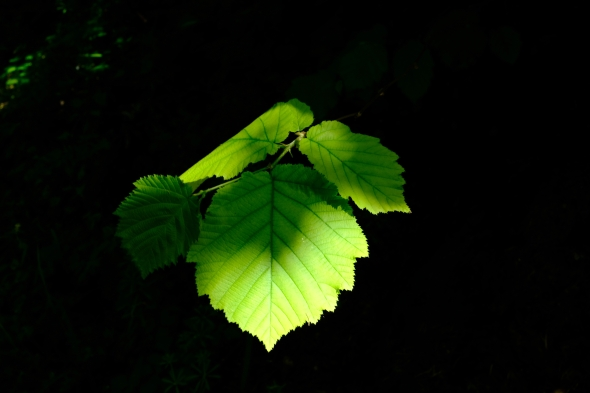Green l