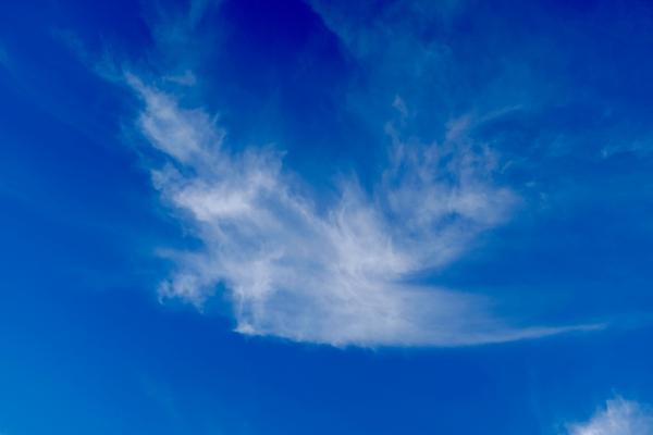 bird-shaped cloud