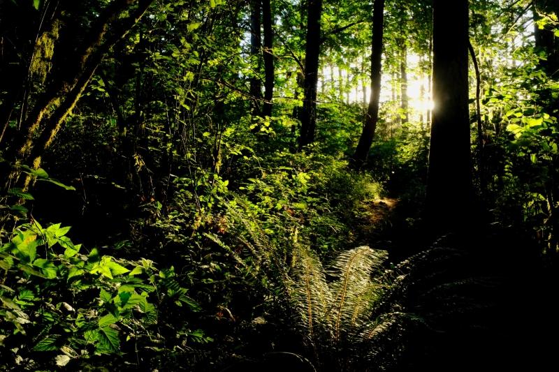 Sunlight in forest