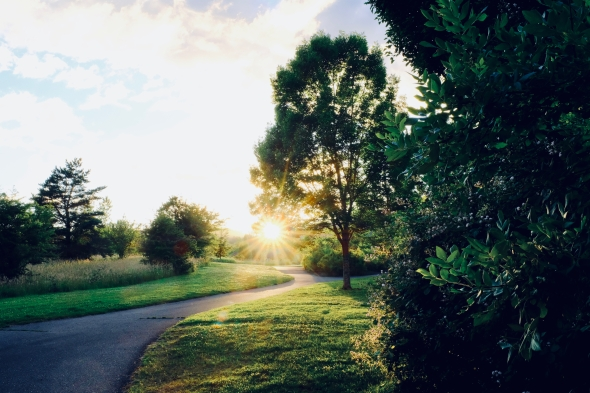 Path, grass, trees and setting sun