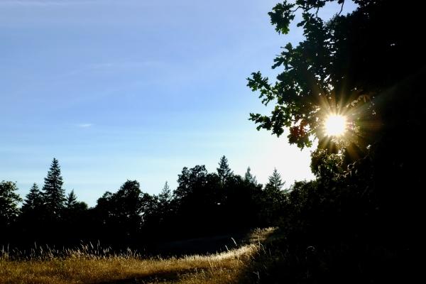 Golden grasses and trees beneath setting sun