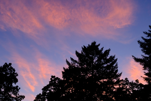 Orange clouds and big trees silhouetted