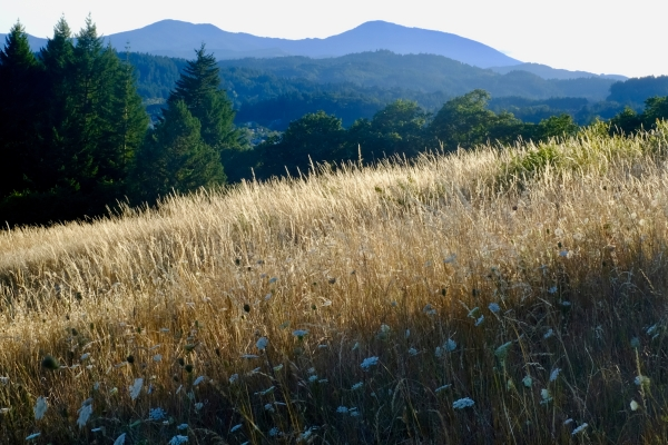 meadow with mountains in distance