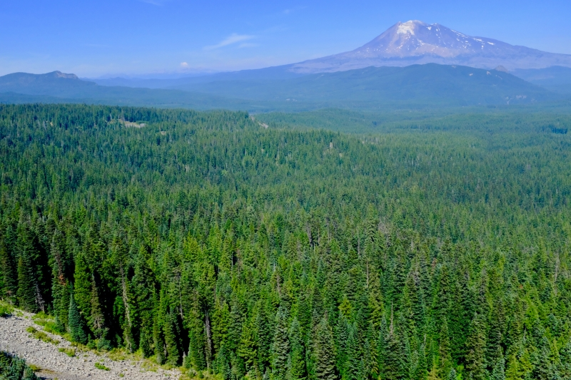 Mt. Adams and forest