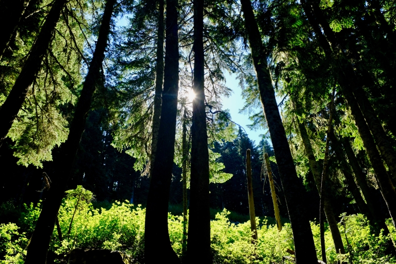 Forest backlit by sun