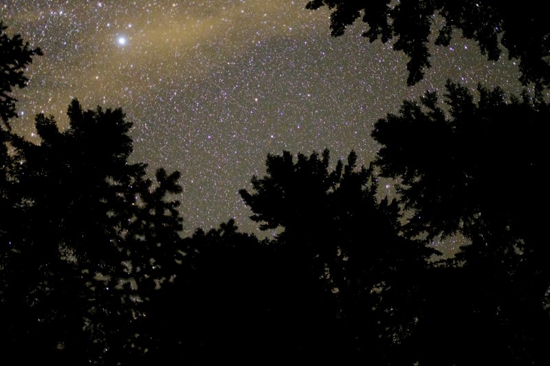 Starry sky over treetops