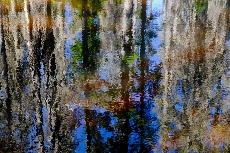 Abstract reflections of trees