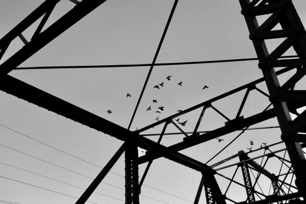 Pigeons and metal bridge structure