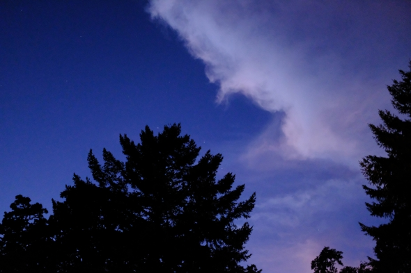 White cloud and tree at dusk