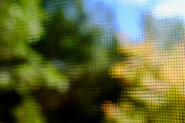Abstract of autumn foliage through window screen