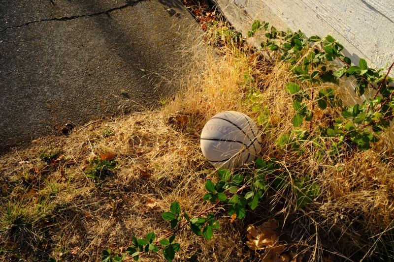 basketball, blackberry vines and grasses