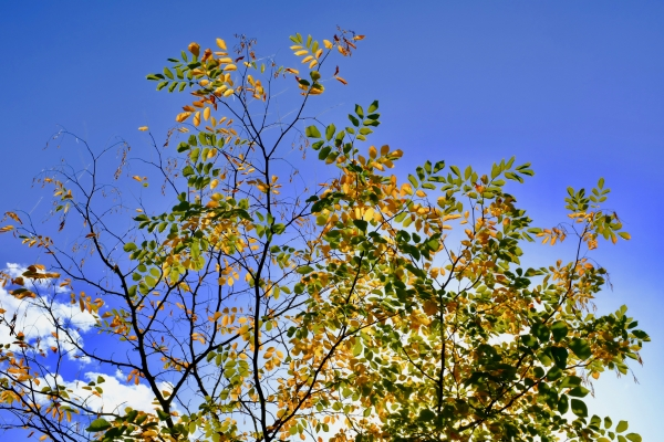 Fall foliage in sunshine