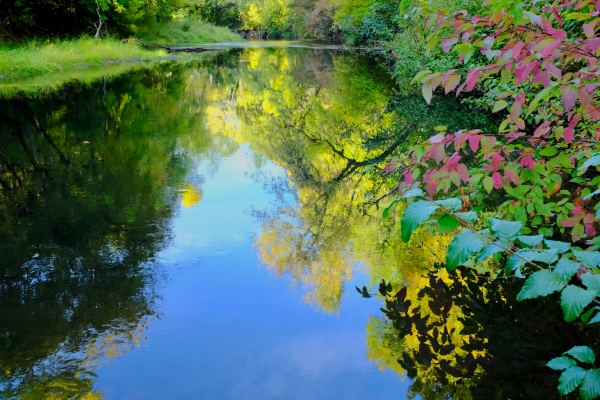 marys river and fall foliage, oregon